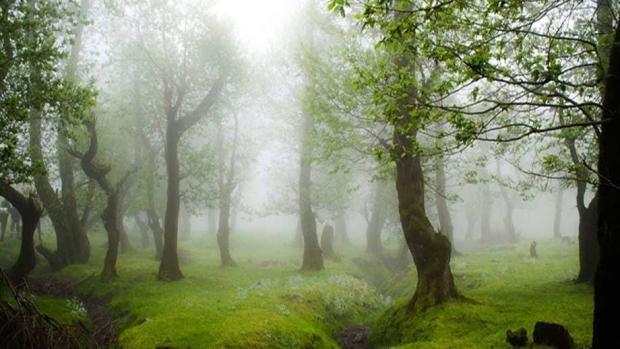 کمپین « برای خودمان، برای طبیعت » توسط سامسونگ در ایران برگزار میشود