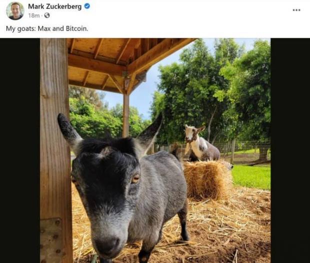 زاکربرگ نام حیوان خانگی خود را نام بیت کوین گذاشت!